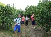 陆河上护镇护径村农业产业园皇帝柑种植基地