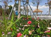 汕尾海滨公园踏春