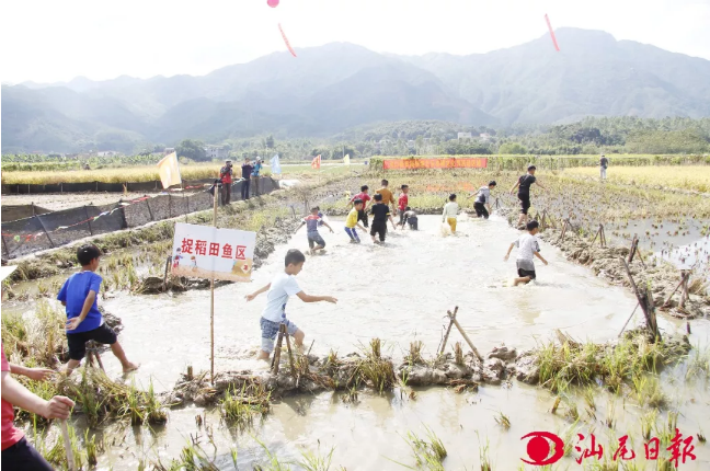 陆河河口举办首届稻渔之乐农耕文化节 陆河新闻 第1张