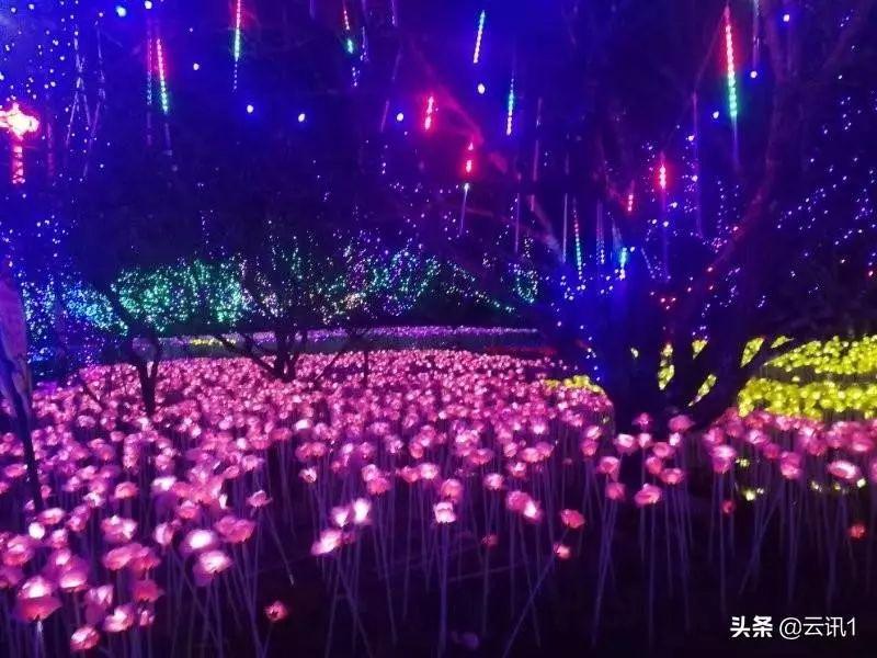 陆河世外梅园艺术灯光秀梅花节 陆河新闻 第6张