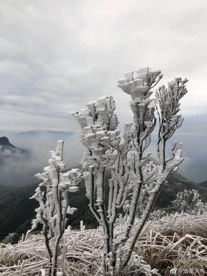"""汕尾也""""下雪""""了 海丰莲花山出现绝美雾凇 海丰新闻 第3张"""