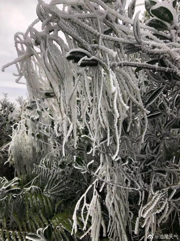 """汕尾也""""下雪""""了 海丰莲花山出现绝美雾凇 海丰新闻 第4张"""