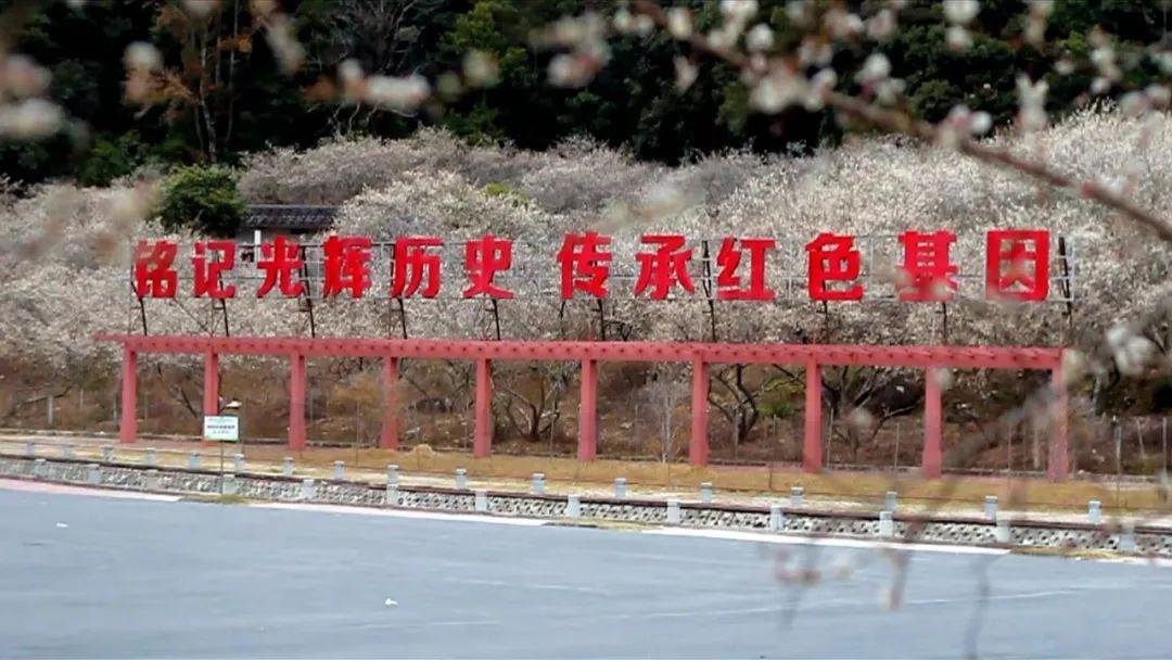 海丰黄羌林场的梅花火了 海丰新闻 第3张
