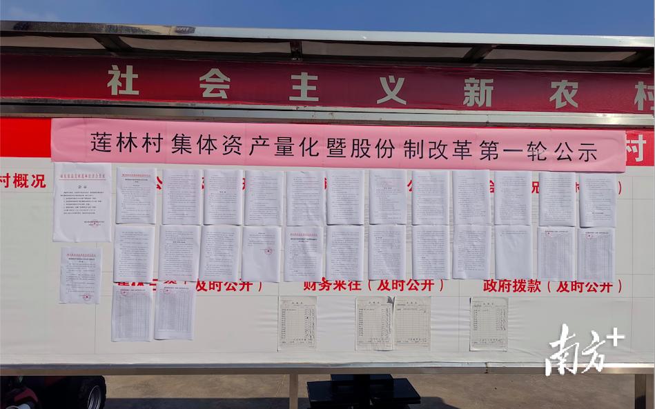 """陆丰高美村:股份合作制改革让荒山变""""金山"""" 陆丰新闻 第1张"""